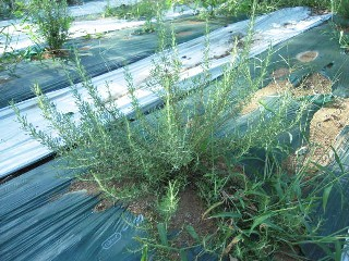 2009_08_28 herb 003.jpg